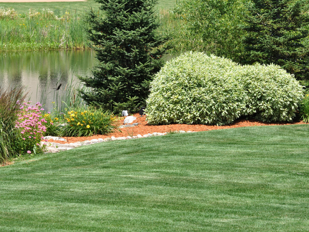 Want Professional Lawn Spraying for Your Idaho Yard?