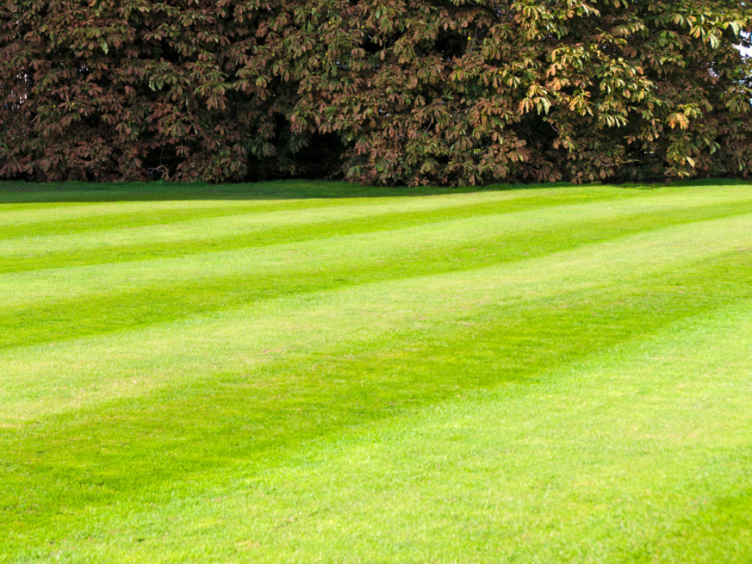 Mountain View Spraying | Your Lawn Care Experts